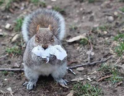 动物吃塑料袋